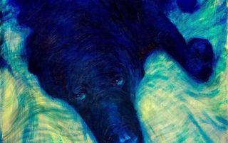 Boomer - Black Labrador